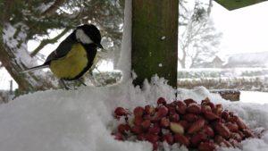 Bird with nuts - Adrian Porter