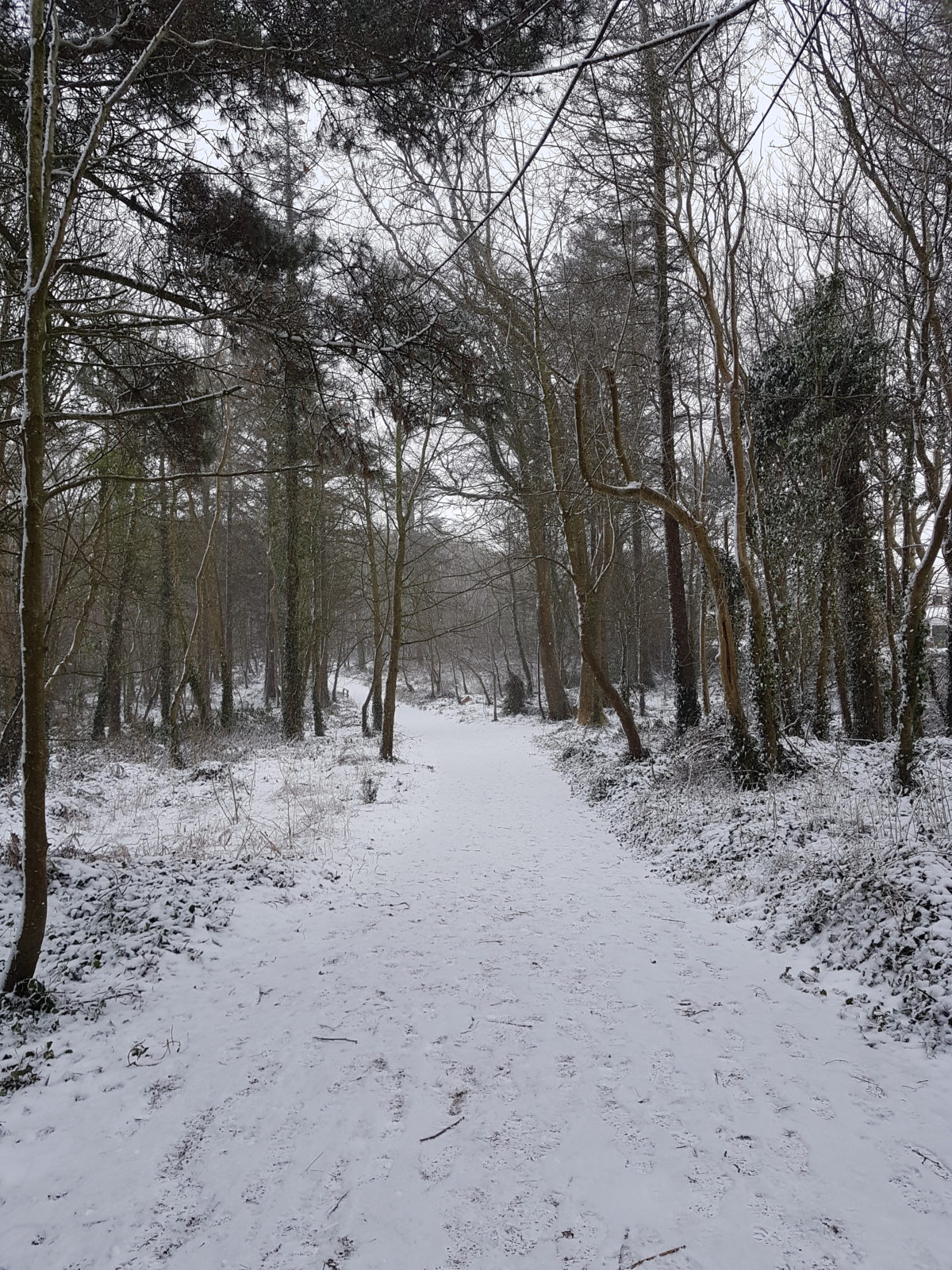 Woods in the snow – Denis O Donoghue