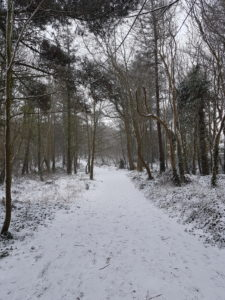 Woods in the snow - Denis O Donoghue